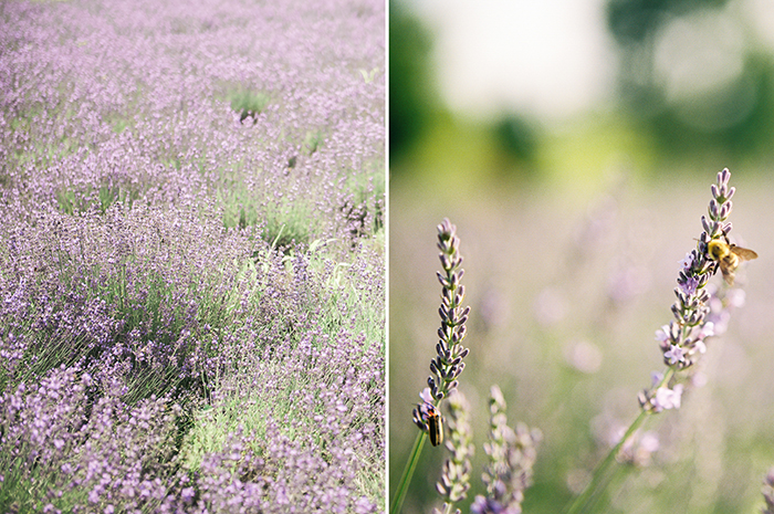 maternitylavender