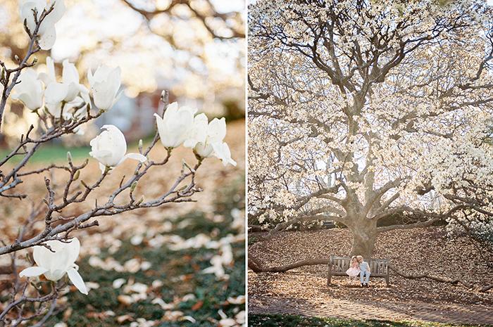 Seliga-Beth-Spring-13